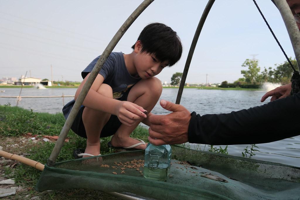 高雄市湖內區綠水塘無毒蝦 (24)