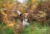 Eliz | London Dog Photography
