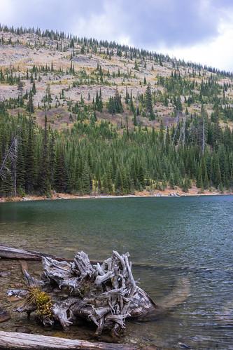 montana whitefishrange
