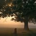 Golden Mist by beatriceverez