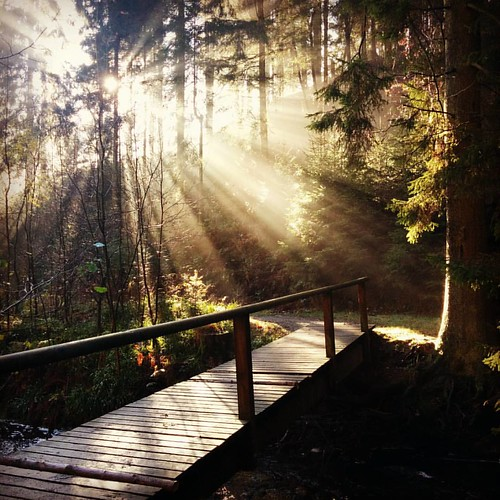 Die ochtend in het bos. #hiking #Ardennen #boswandeling #beautifulbelgium #forest #autumnlove