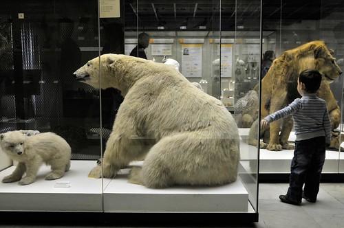 Школьники со всего мира смогут до конца лета бесплатно посетить Дарвиновский музей