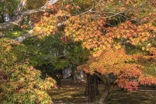 Kyoto Imperial Palace on OCT 30, 2015 (38)