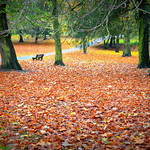 Autumn at Ashton Park, Preston
