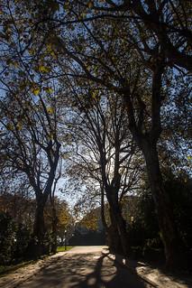 Image of Jardins do Palácio de Cristal. park portugal porto canon60d canonefs1585mmf3556isusm