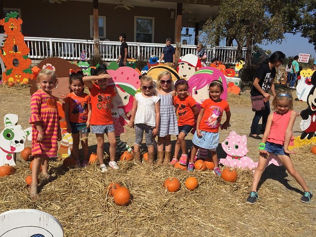 Flower Mound Pumpkin Patch 2015
