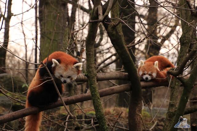 Tierpark Berlin 29.11.2015   17