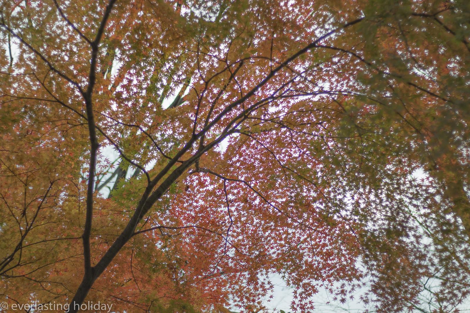小金井公園 Koganei Park-0007
