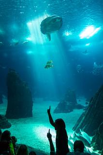 صورة Lisbon Oceanarium. school fish silhouette aquarium rays schoolclass pointing molamola oceansunfish oceanáriodelisboa lisbonoceanarium silhou månefisk