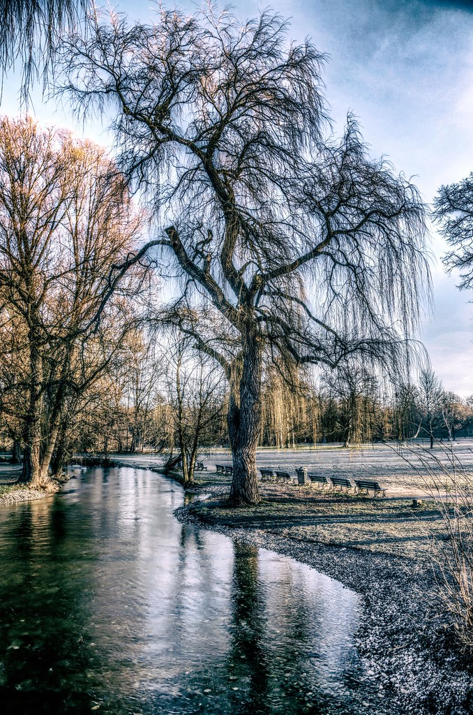 Surreal Winter Tree