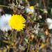 Autum Wildflowers_MIN 337_35