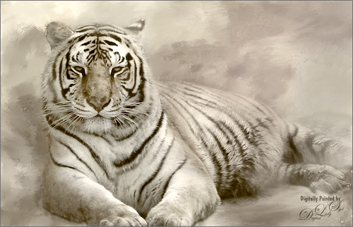 Image of a beautiful tiger