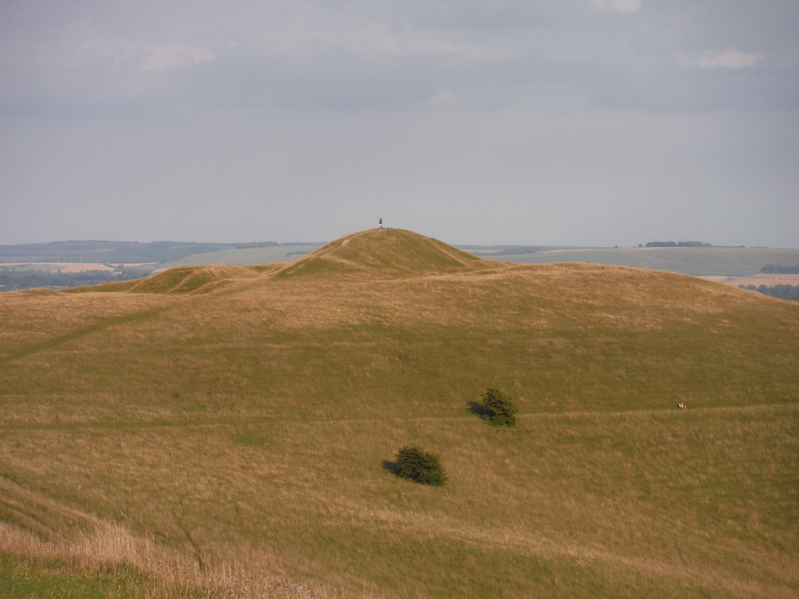 Knoll with Adam's Grave (Long Barrow) SWC Walk 255 Pewsey or Marlborough Circular via Avebury