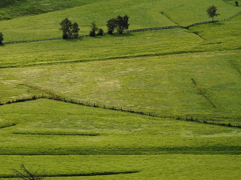 Green fields in Rein
