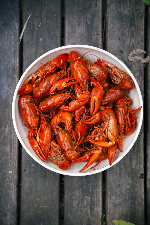 Finland_Crayfish-2587