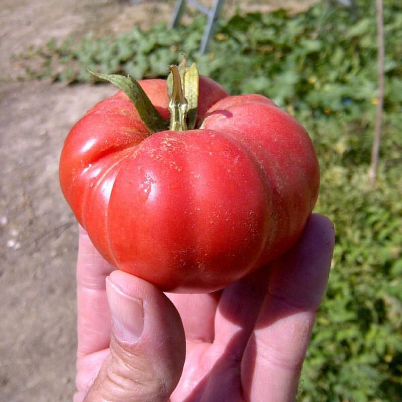 Los ultimos #tomates #pueblo