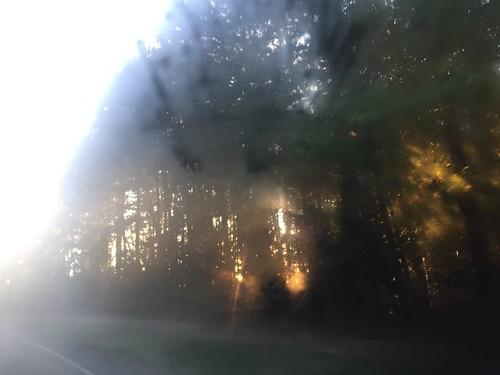 trees mist sunrise squareready vscocam