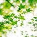 楓葉 by Yui Shang Photography