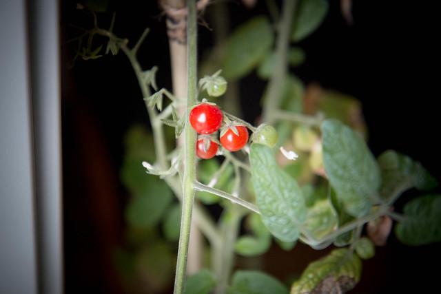 Några av våra krukväxter