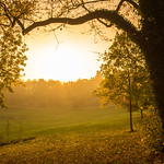 Autumn in Avenham Park