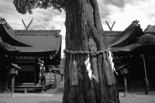 Sumiyoshi-Taisya Shrine, Osaka on OCT 31, 2015 (5)