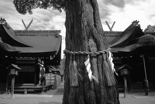 Sumiyoshi-Taisya Shrine, Osaka on OCT 31, 2015 (5)
