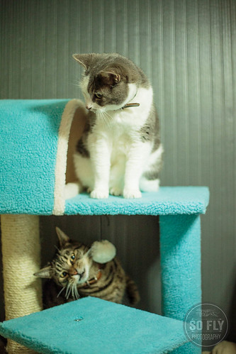 Chewy Cat Tree-7730