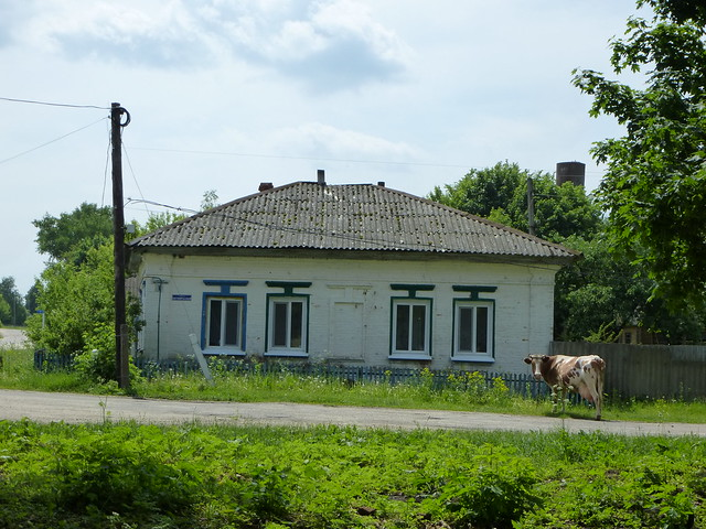 Cow and house