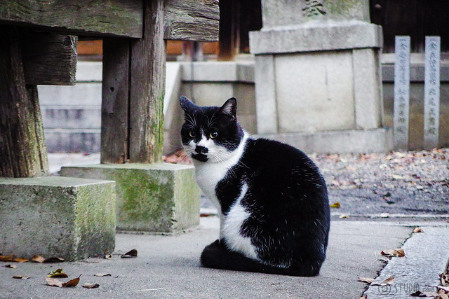 Today's Cat@2015-12-26