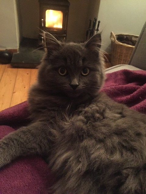 cost of a maine coon cat