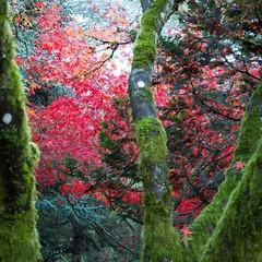 #KubotaGarden #Seattle #fallfoliage