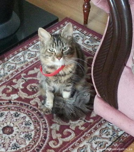 Mon, Oct 24th, 2016 Lost Female Cat - Aughnaclappa Rathnure, Rathnure, Wexford