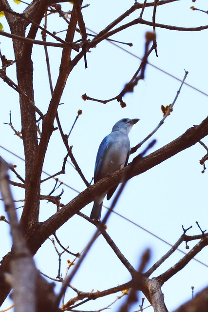 Between a tree we saw a blue bird