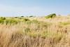 Ocean Shore Dunes by kevinkerrick