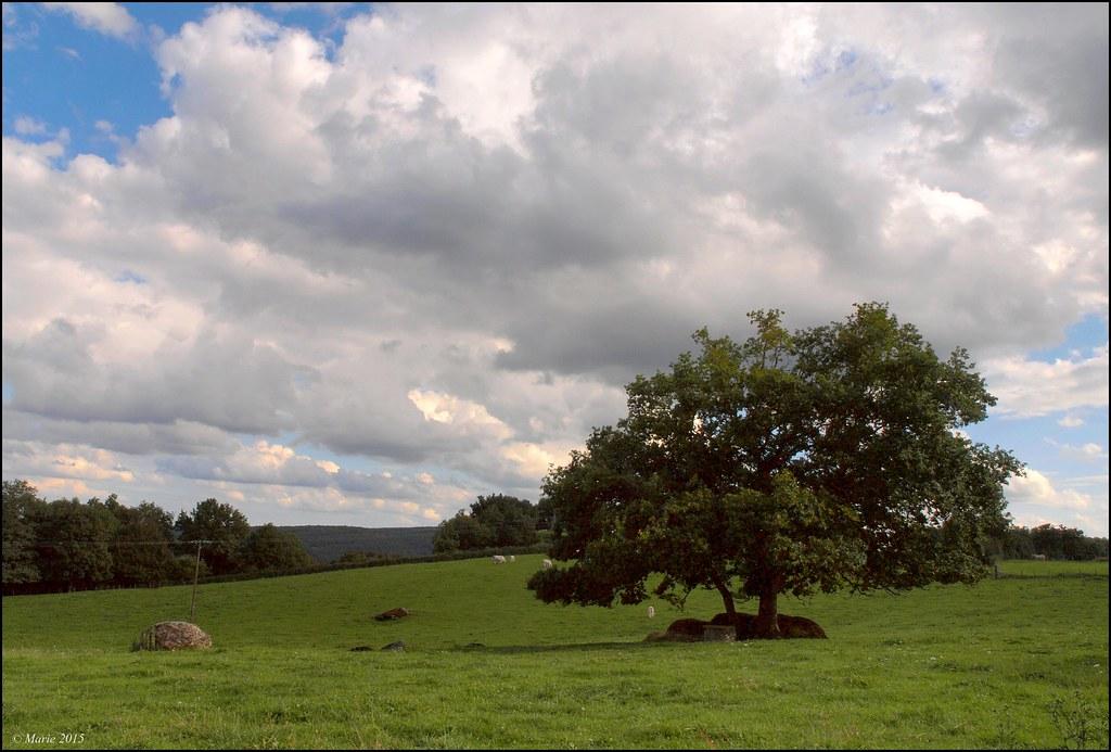 Auprès de mon arbre  21229903376_16bf855e05_b
