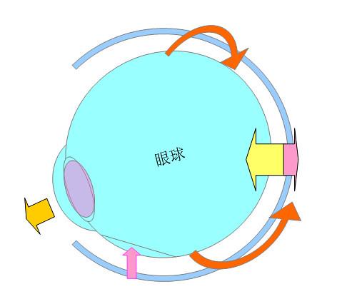 屈折性近視・軸性近視になるプロセスとメカニズム(パターン2)03
