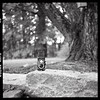 shot with yashica d - 610 by bobby singleton