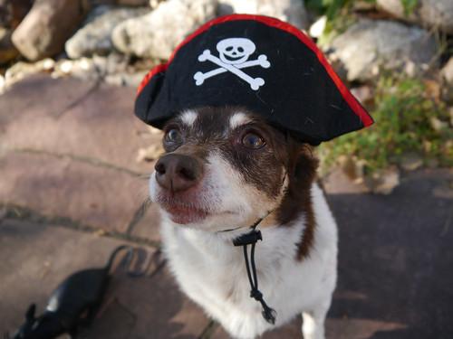 2015-10-01 - Rennie Pirate - 0003 [flickr]