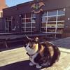 """""""Waffles"""" enjoying the sunshine at Apex."""
