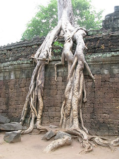 Tree roots in Ta Prohm, Siem Reap, Cambodia