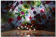 花海節+菊花園