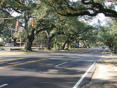 Quercus virginiana street sceen Mobile