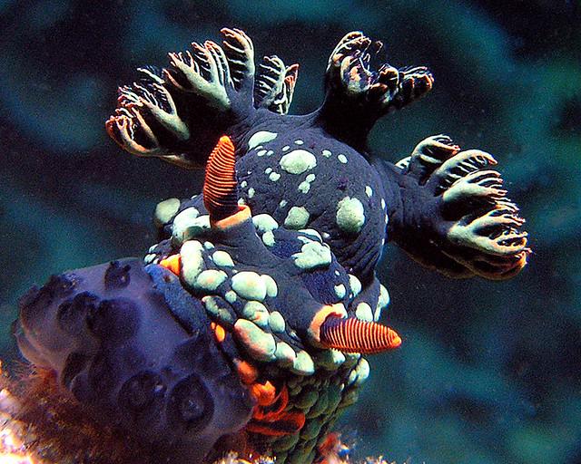 scuba diving tioman malaysia