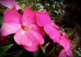 Blume Blüte / flower blossom 037