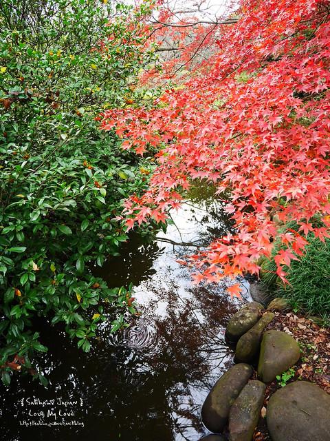 日本東京自由行新宿御苑庭園景點 (12)