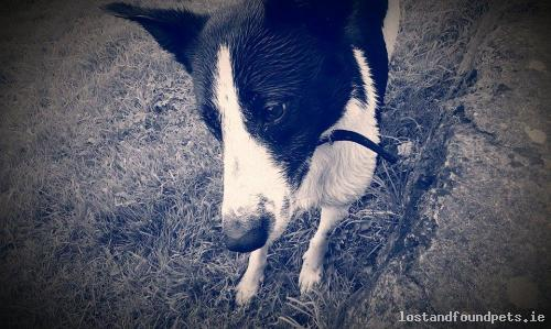 Sun, Nov 13th, 2016 Lost Male Dog - Cloonmore, Tuam, Galway