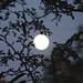 Ebony Moon - IMG_1255