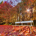 Autumnal Paradise || MT WILSON || BLUE MOUNTAINS by rhyspope