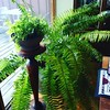 Tried to bring the fern inside for the fall/winter...but I think it's got a bit too big for the #hantzhouse