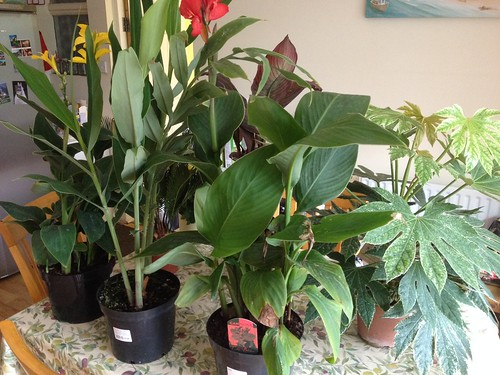 Tropical Garden Plants